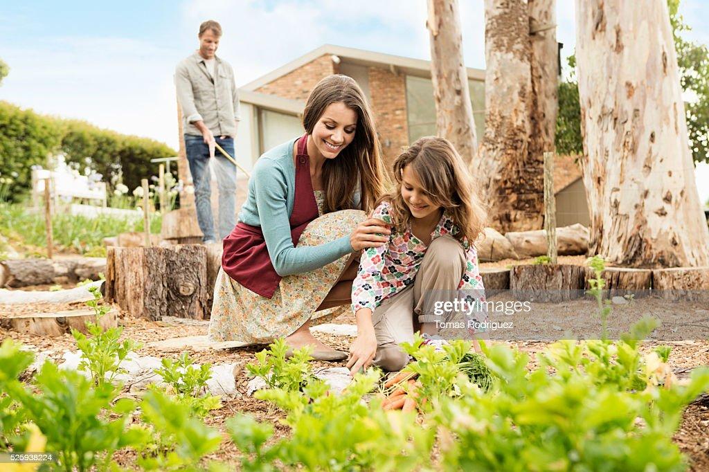 Parents with daughter (8-9) in vegetable garden : Foto de stock