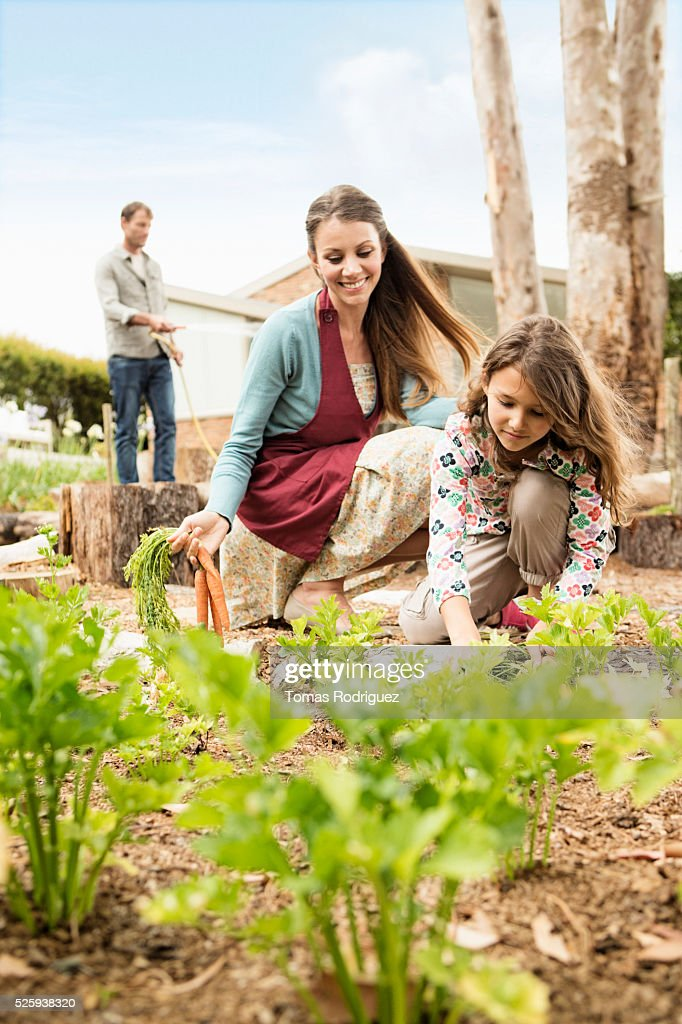 Parents with daughter (8-9) in vegetable garden : Stock-Foto