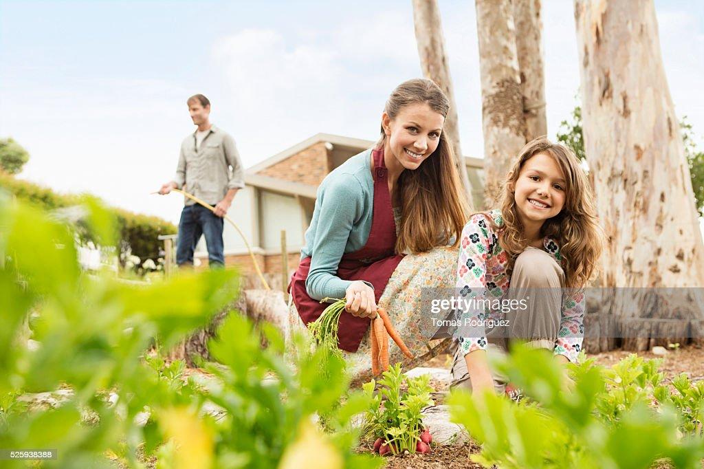 Parents with daughter (8-9) in vegetable garden : Stockfoto