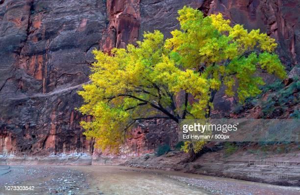 paria canyon tree - arizona usa - paria canyon stock pictures, royalty-free photos & images