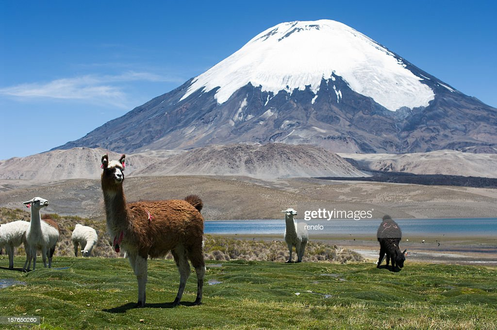 Parinacota Vulkan : Stock-Foto