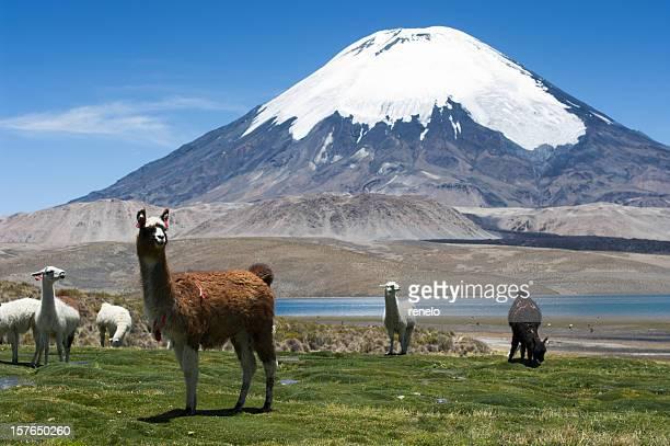 Parinacota volcán