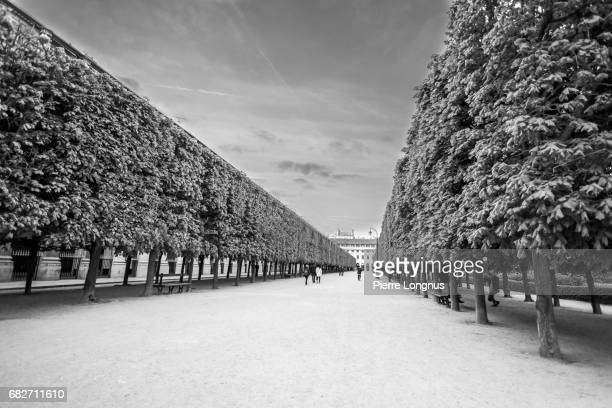 paris - france : pathway in the park of the palais royal - palais royal stock pictures, royalty-free photos & images