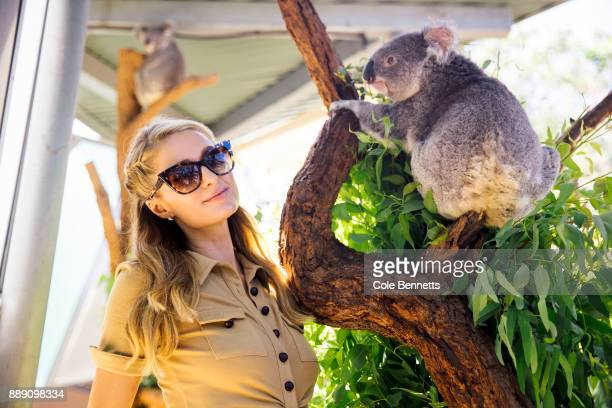 Paris Hilton visits a koala enclosure at Taronga Zoo during a promotion visit to Australia to launch her 23rd fragrance Rosé Rush on December 1 2017...