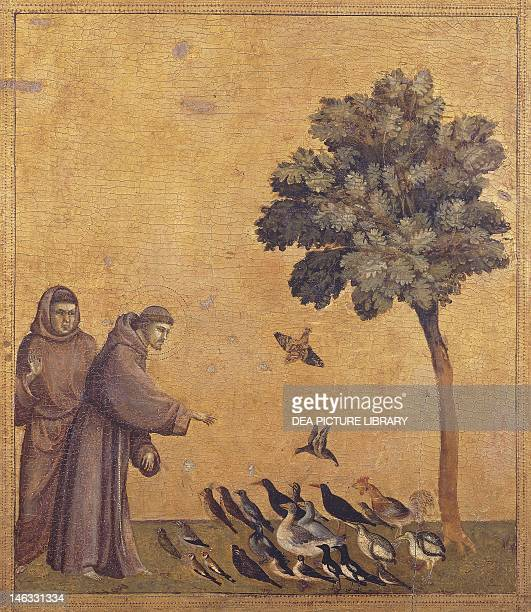 Paris Musée Du Louvre St Francis preaching to birds detail from the predella of the Stigmata of St Francis ca 1300 by Giotto tempera on wood 313x163...