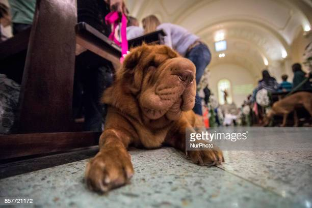 Parishioners accompanied by their pets attend a mass on the occasion of St Francis of Assisi Day in Sao Paulo Brazil 04 October 2017 St Francis of...