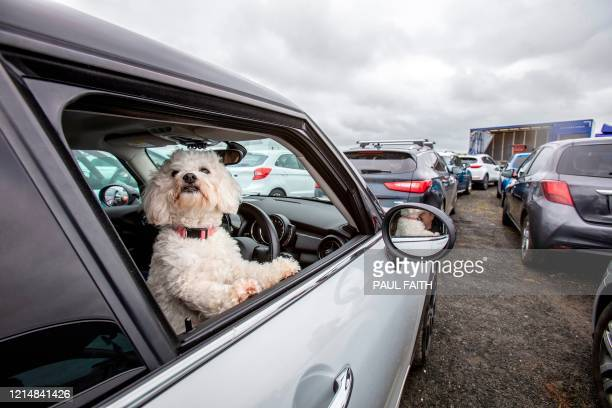 Parishioner's dog looks out of a window as they sit in their cars to socially distance whislt they wait for Pastor Billy Jones to stand inside a...