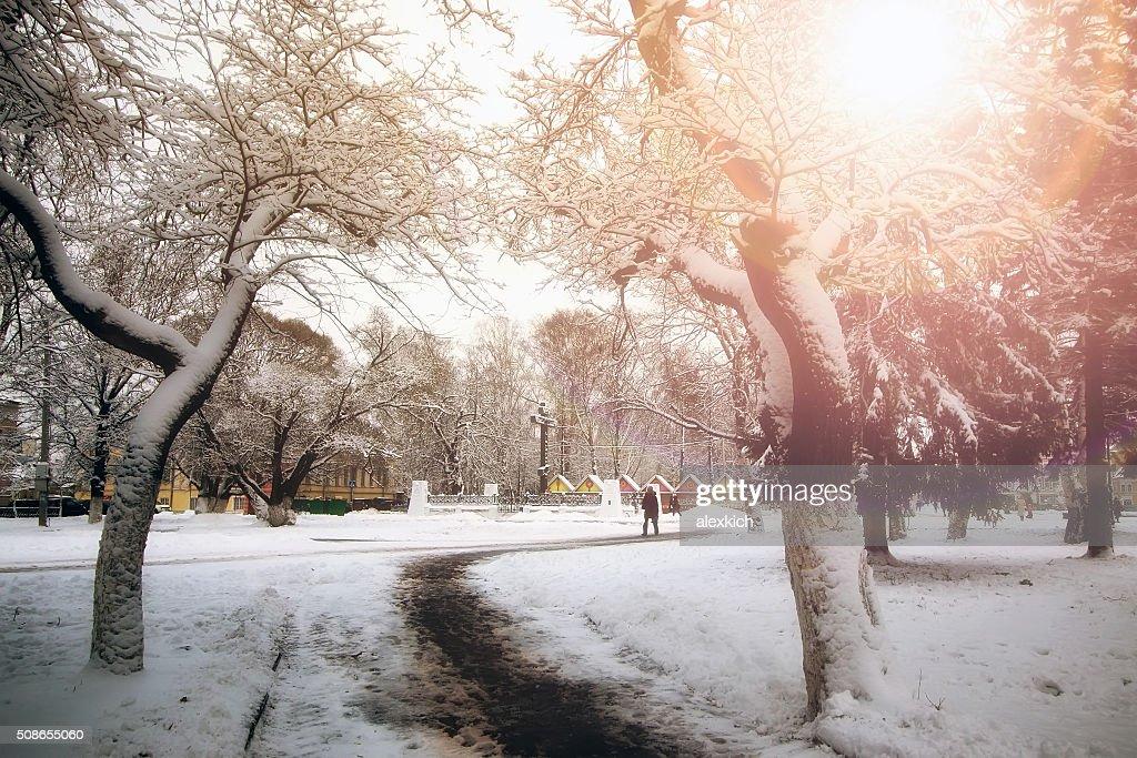 park alley tree way winter : Stock Photo