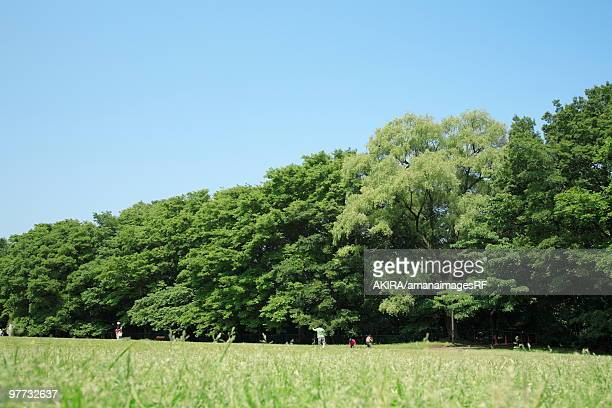 park and people playing, setagaya ward, tokyo prefecture, honshu, japan  - 背景に人 ストックフォトと画像