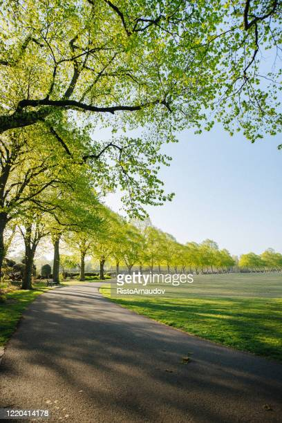 uk park at sunrise - hyde park london stock pictures, royalty-free photos & images