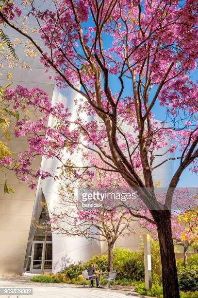 Park at the Walt Disney Concert Hall in downtown Los Angeles California