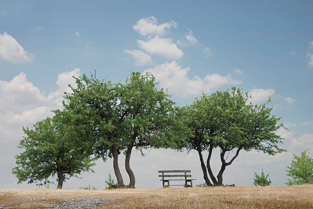 Park Bench and Trees, Meteora, Greece