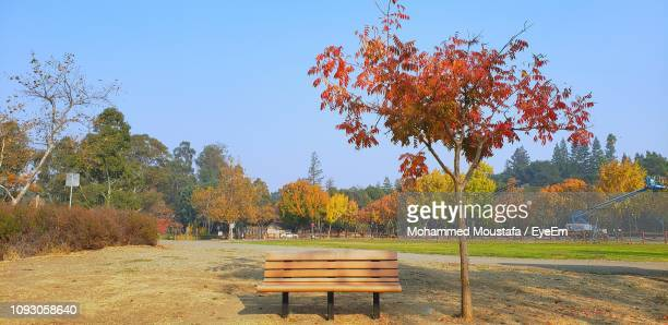 park bench by trees on field against sky during autumn - park bench stock pictures, royalty-free photos & images