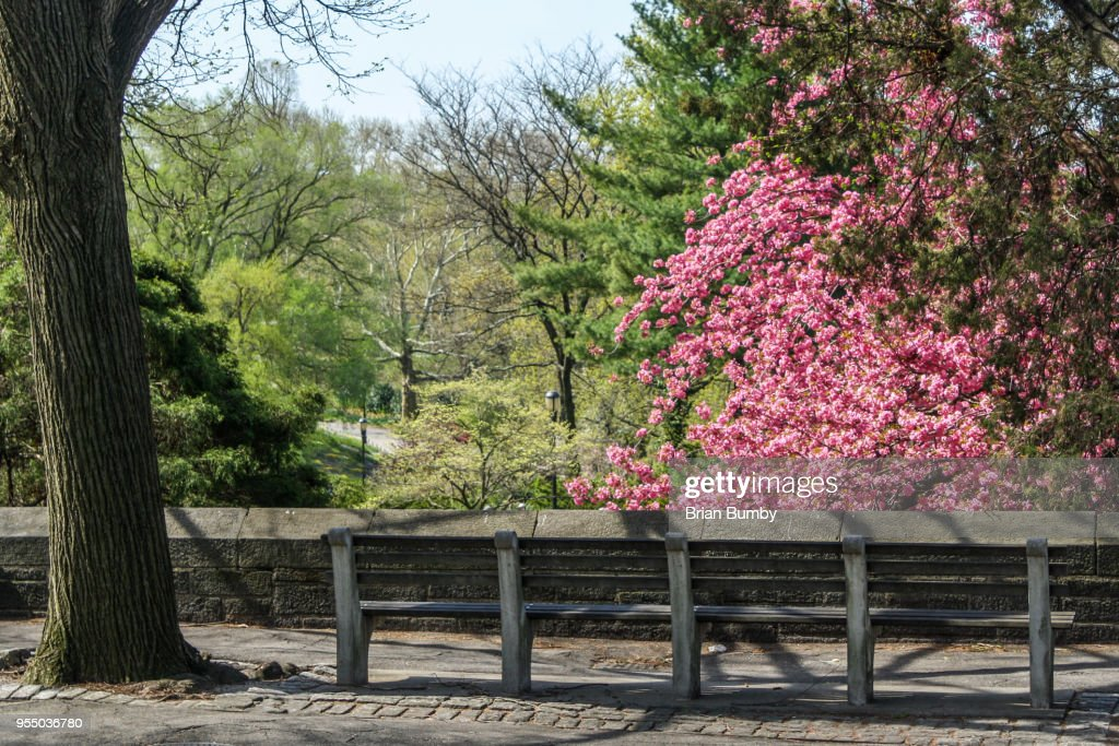 Park Bench Fort Tryon Park New York Ny Stock Photo Getty Images