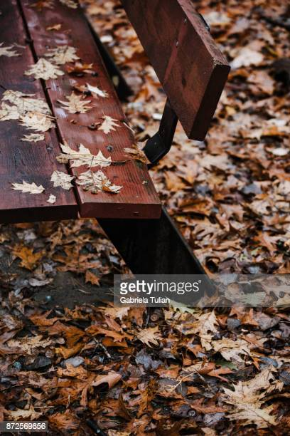Park bench in autumn close up