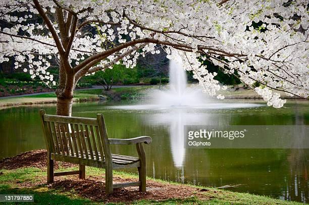 park bench in ruhige szene - ogphoto stock-fotos und bilder