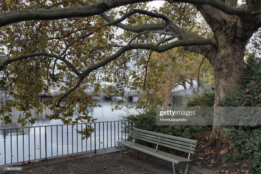 Park bench under a dedicious tree by the riverbank. : Stock Photo
