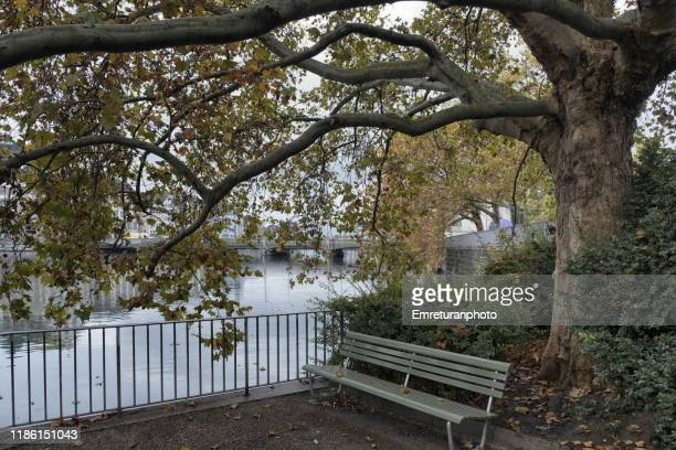 park bench under a dedicious tree by the riverbank. - emreturanphoto stock pictures, royalty-free photos & images