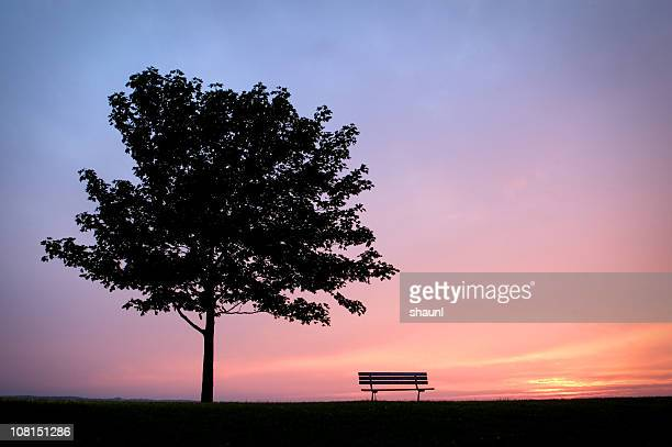 Park Bench with Tree