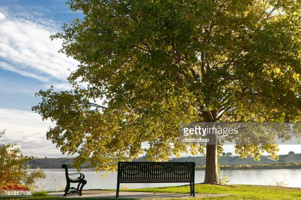 Park Benches Under A Tree