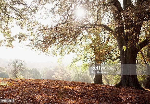 Lichtung im Herbst Park