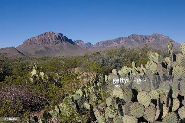 park desert - chihuahua desert stock pictures, royalty-free photos & images