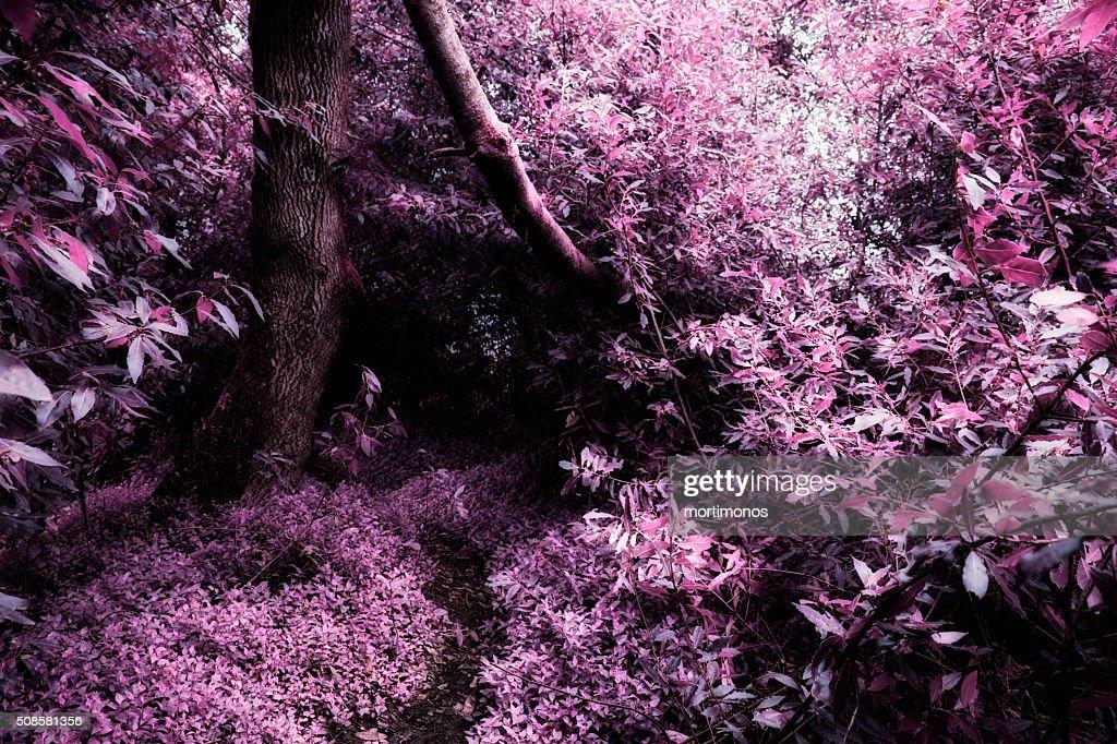 Park do caminho fundo,Portugal. : Stockfoto