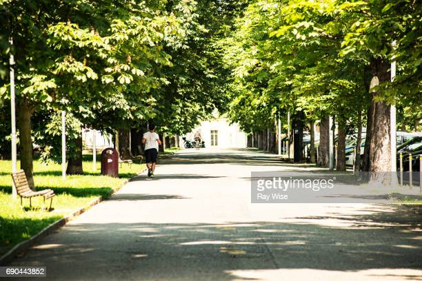 a park in novara italy with a tree lined avenue. - boulevard stock pictures, royalty-free photos & images