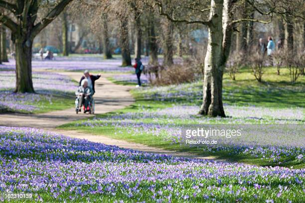 Park in spring with Crocus flowers and wheelchair user
