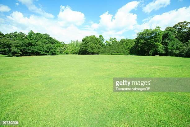 Park, Kyoto City, Kyoto Prefecture, Honshu, Japan