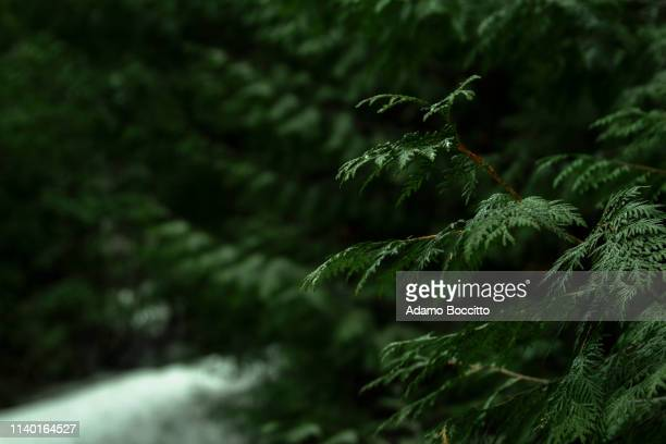 park leaves - valley stock pictures, royalty-free photos & images