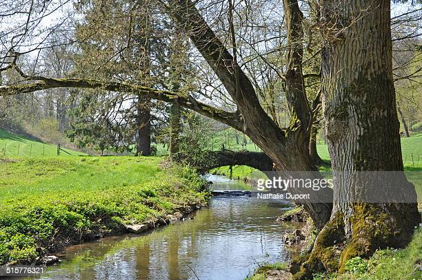 Park of the castle of Presles crossed by the brook Biesme, Wallonia.