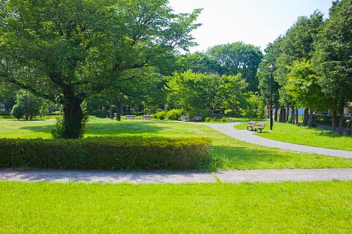 park 1135899536