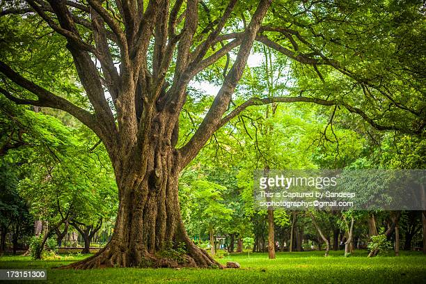 park - tree trunk stock pictures, royalty-free photos & images