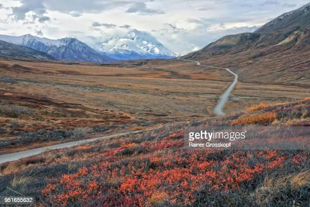 park road in an autumn tundra landscape leading toward mount denali - rainer grosskopf - fotografias e filmes do acervo