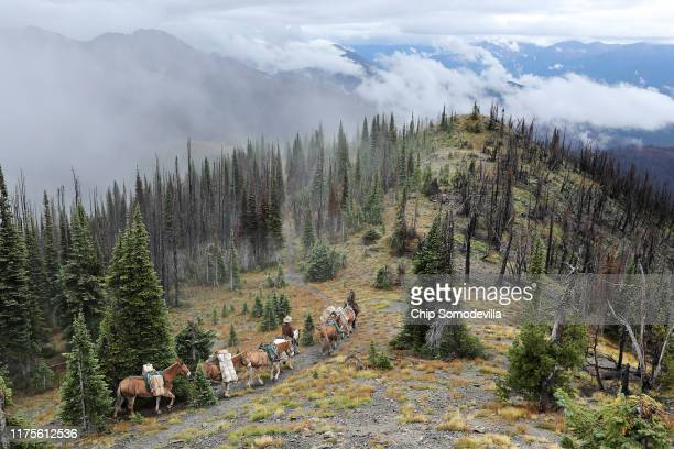 S Park Service Animal Packers Jill Michalak and Jacob Ellis lead a team of mules back down the mountain after delivering gear supplies and 585...