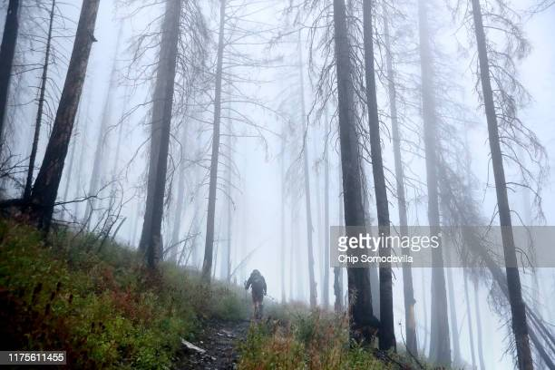 S Park Service Revegetation Crew Lead Carleton Gritts hikes through fog among the trees blackened by the 2017 Sprague Creek Fire on his way to the Mt...