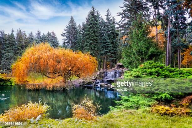 park skaryszewski in autumn, warsaw, poland - polonia foto e immagini stock