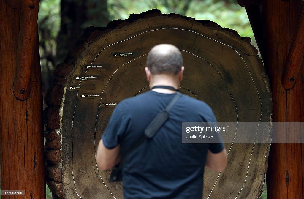 A park visitor looks at age rings on a cut section of a Coastal Redwood tree at Muir Woods National Monument on August 20, 2013 in Mill Valley, California. A four-year study by the Save the Redwoods League called 'the Redwoods and Climate Change Initiative' found that due to changing environmental conditions, California's Coast Redwoods and Giant Sequoias are experiencing an unprecedented growth surge and have produced more wood over the past century than any other time in their lives.