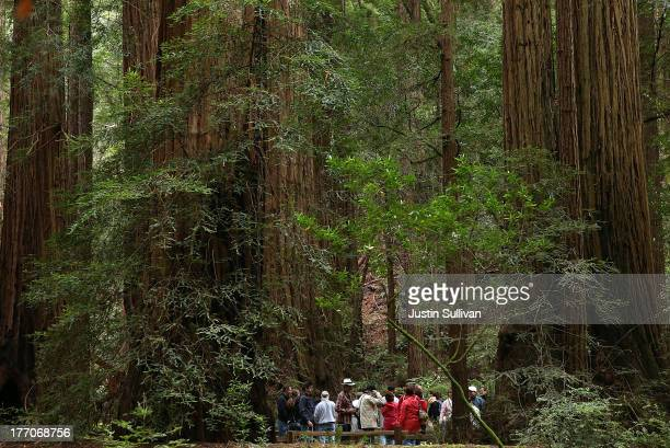 Park visitors walk along a path of Coastal Redwood trees at Muir Woods National Monument on August 20 2013 in Mill Valley California A fouryear study...