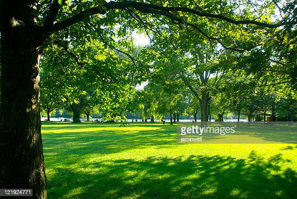 Park with beautiful lawn and trees Center IslandToronto Canda