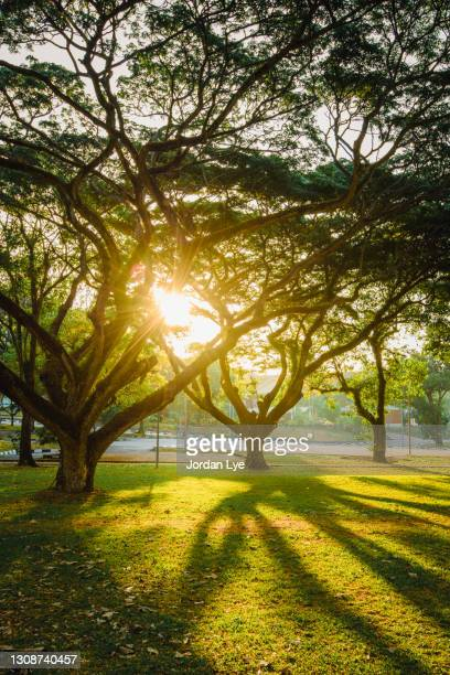 park with tree and sunlight - formal glove stock pictures, royalty-free photos & images