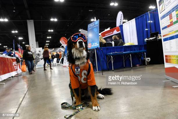 DENVER CO NOVEMBER 12 Parker the Loveland Ski Area mascot shows off his madefordogs goggles by Rex Specs during the 26th annual Colorado Ski and...