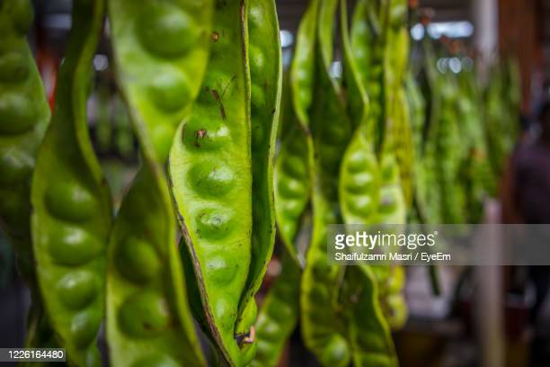parkia specioca or petai in local name hanging in chow kit market - shaifulzamri stock pictures, royalty-free photos & images