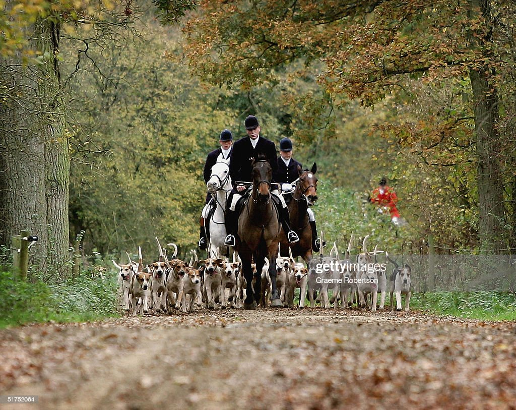 Parliament Moves Towards A Resolution On Hunting Issues : Stock Photo