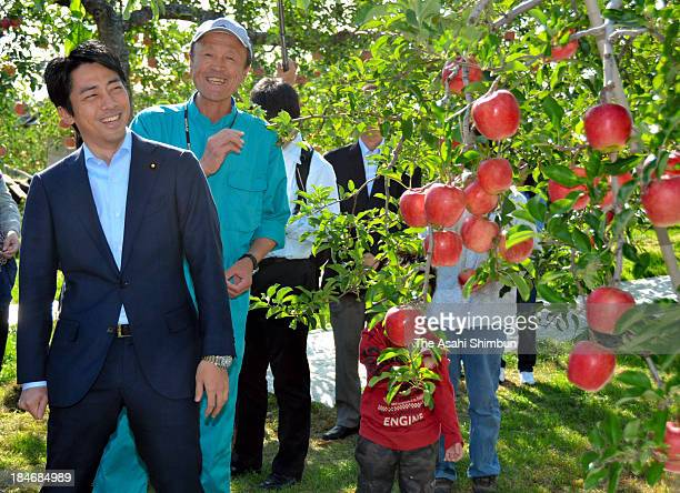 Parliamentary Secretary for Reconstruction Shinjiro Koizumi inspects an apple farmer who is suffering harmful rumour of the crippled nuclear power...