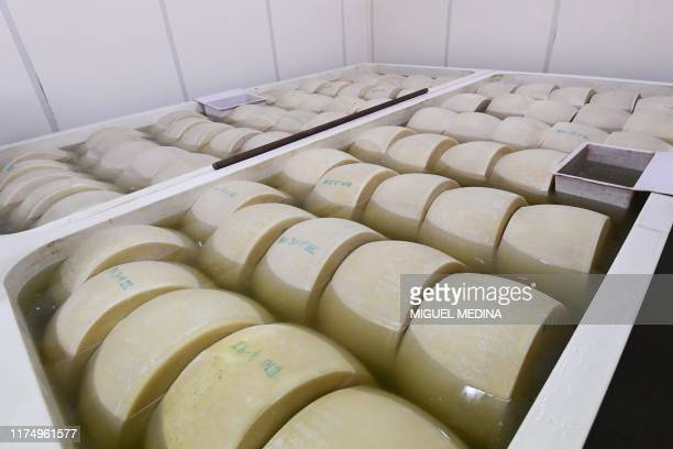 Parmesan cheese wheels are pictured during the elaboration process before sending them to the refinement on September 10 2019 at the Iris organic...