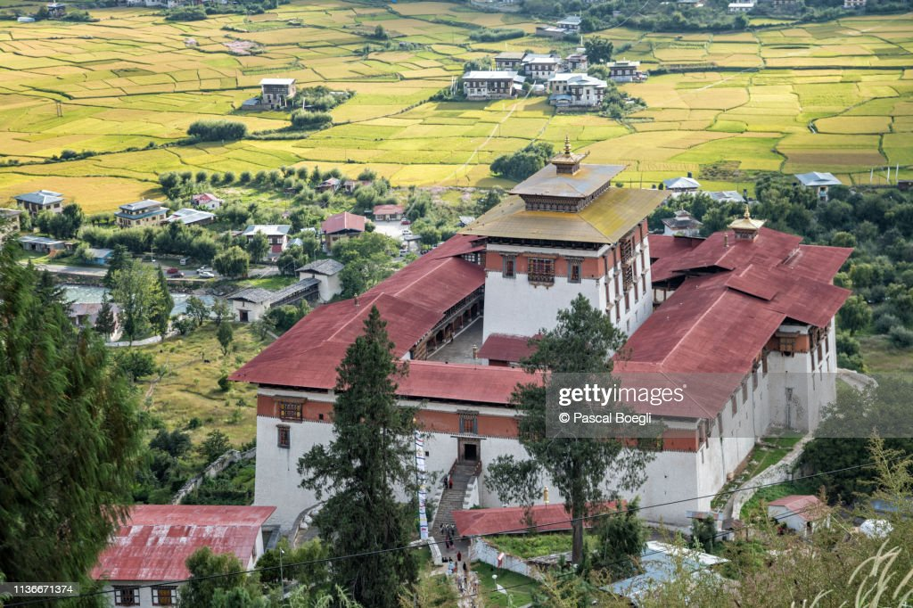 Paro dzong (Rinpung Dzong) above the rice fields, Bhutan : Stock Photo