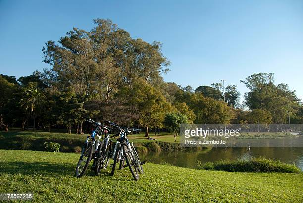 parque do ibirapuera - ibirapuera park stock pictures, royalty-free photos & images