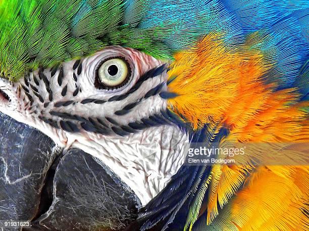 parrot eye - parrot stock pictures, royalty-free photos & images